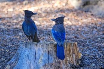 Mexican standoff? Stellar Jays at an impasse