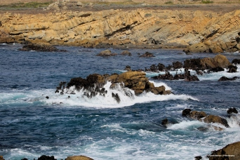 Salt Point Marine Reserve