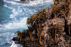 Exposed seaweed