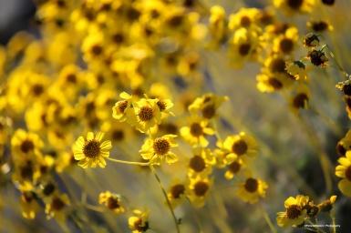 3-10-WildflowerMsign