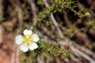 Wildflowers line the path
