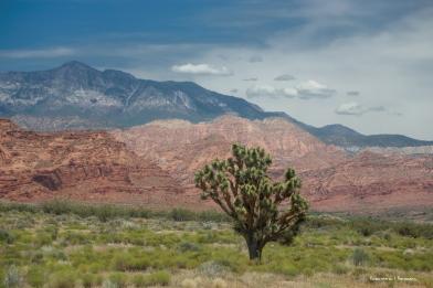 Joshua Tree coming into the valley I-15
