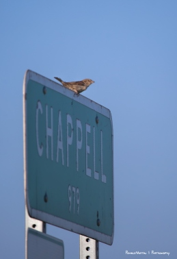 Welcome to Chappell