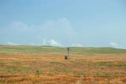 The lone windmill