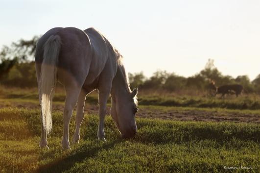 Horse Heavan