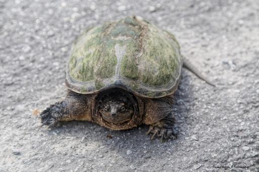 Prehistoric beast..or turtle;)