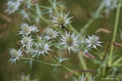 Stunning seed heads