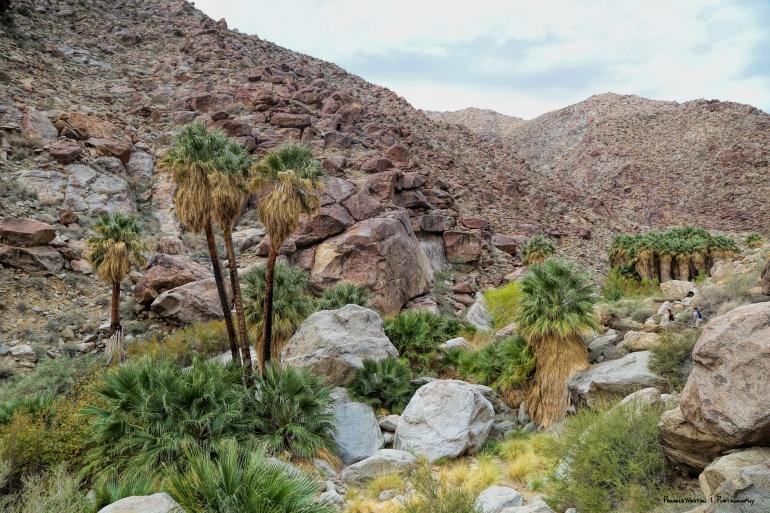 Palm Canyon Oasis