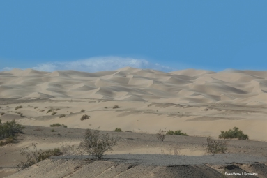 I 8 passes through the Algondones dunes, a narrow but long strip of wilderness