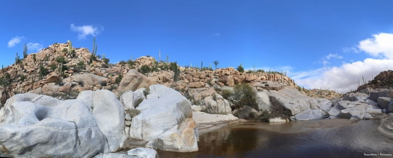 Ponds in the desert