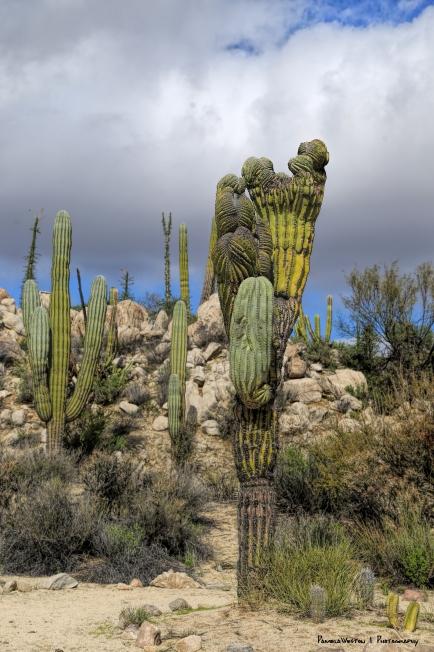 Wonderful cactus