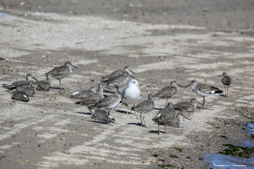 Just act natural, they'll never know I'm a gull....
