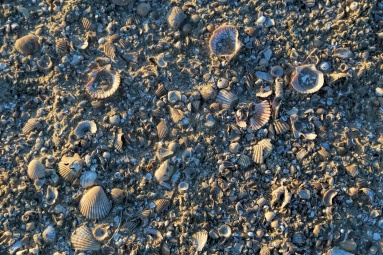 I'm walking on sunshine..oops, I mean seashells;) This is where we parked