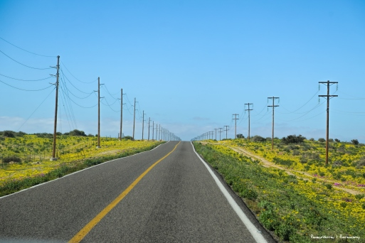 Road North towards Guerrero Negro