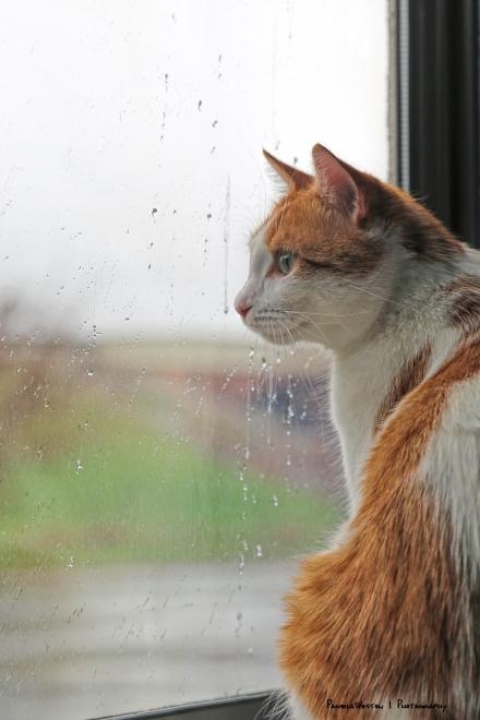 I hates rainy days....