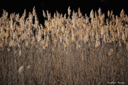 Grasses in the late day sun