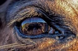 12-7-eyes of animals