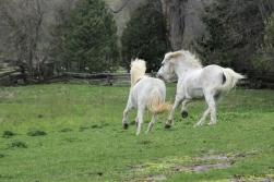 grumpy ponies;)