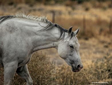 6-19-Horses in nature