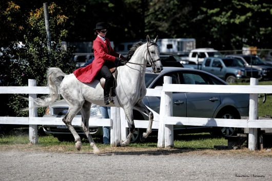 Gaited Horse class