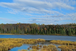 The magnificent Spruce bog