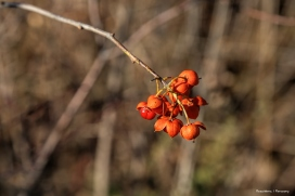 Beautiful berries along the rivers edge