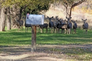 You have mail...and deer:)