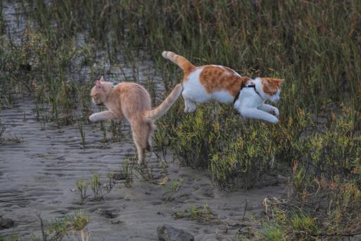 Jumping for joy-Kitten Ballet!