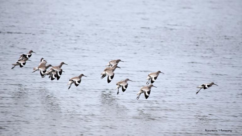 Willets landing