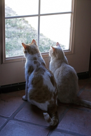 We were not the only ones looking at the BIG kitty!