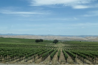 Wine Groves South of King City