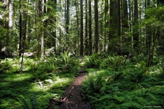 A half mile trail leads through the Founders grove where you can see and walk next to several immense fallen as well as living trees