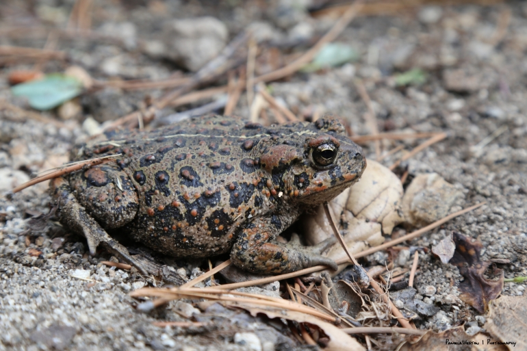 as well as the toads!