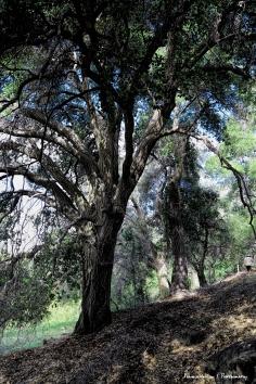 Walking along the arroyo