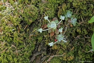 Succulent growing on the bark of a tree