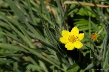 Beautiful little wildflowers