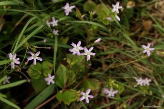 Wildflowers along the hiking path
