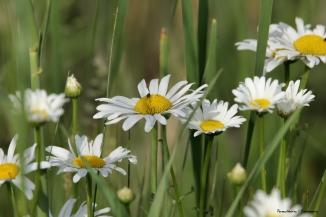 Wildflowers beside the road